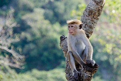 Полиция задержала приучивших обезьян к воровству мошенников