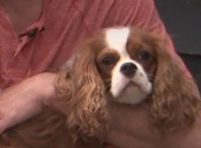 Чудесное возвращение маленького Чарли: как собака после короткой разлуки вновь встретилась с хозяином