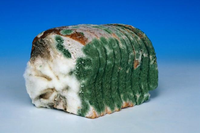 Что будет, если съесть хлеб с плесенью еда