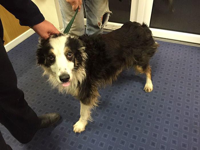 Собака шла почти 2 месяца и преодолела расстояние в 50 миль, чтобы найти своих хозяев верный друг, собаки лучше людей