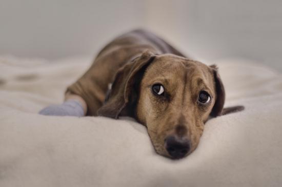 Шейный остеохондроз у собак симптомы лечение