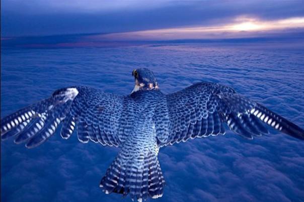 Потрясающие фотографии редких птиц! За верность и преданность горняки поставили Ляльке памятник.