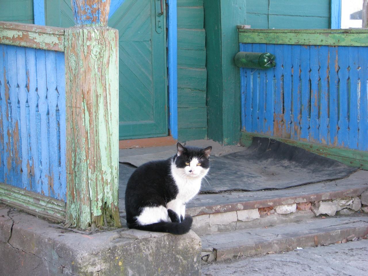 Братья наши меньшие: кошка-хозяйка