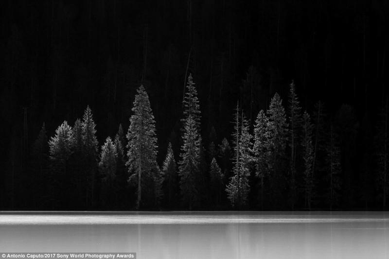 Призрачный лес. Итальянские Альпы, фотогра Антонио Капуто искусство, конкурс, красота, фото