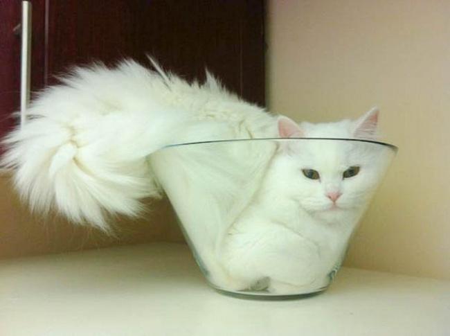 15 «утекающих» котов