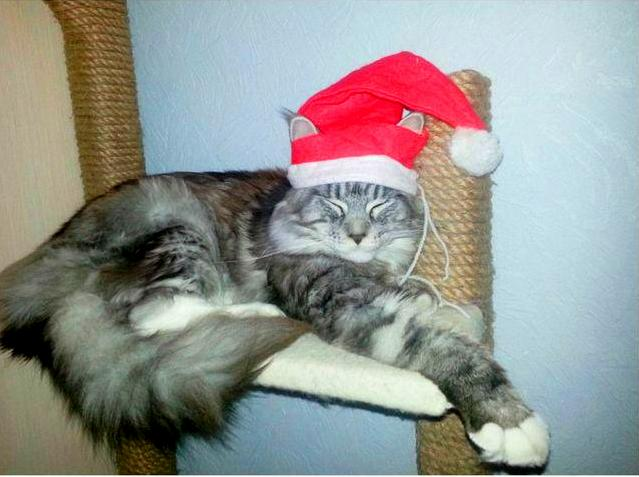 Новогодний колпак для кота своими руками!