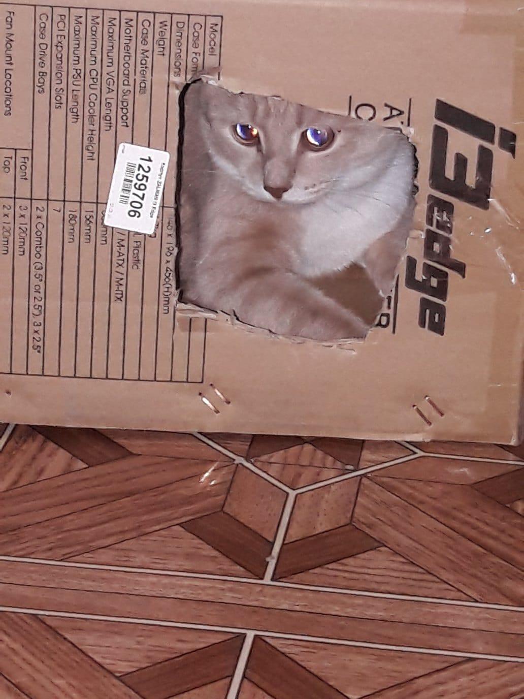 Трое в доме, не считая людей. Коты-бандиты могут уничтожить квартиру, но хозяева в них души не чают