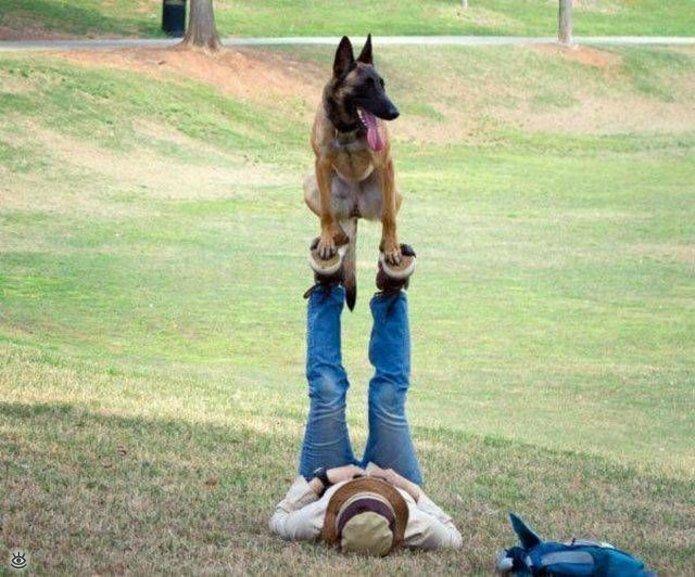 """""""Что-то пошло не так..."""". Собаки в забавных ситуациях домашние животные,наши любимцы"""