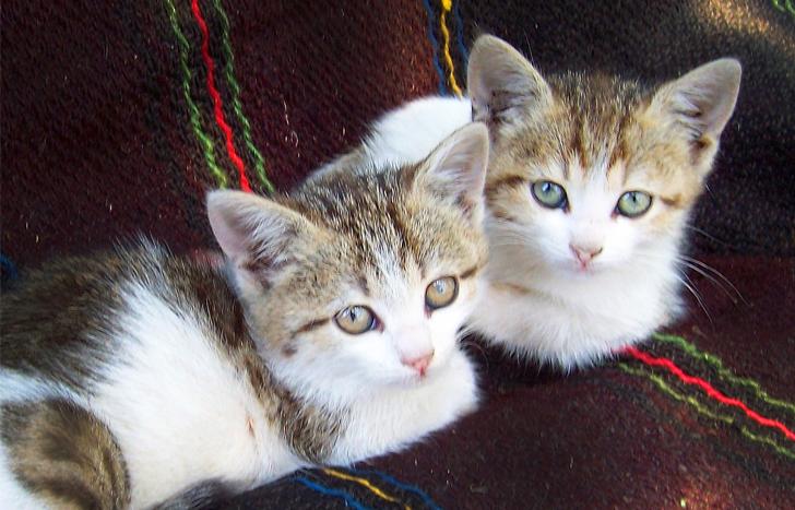 Этих котят пришлось спасать прямо в зоомагазине ценой работы и зарплаты