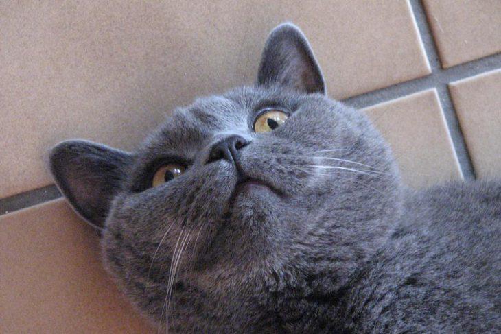 Заболевший кот не глотал таблетку и тогда его хозяевам пришла в голову «гениальная» идея! история,прикол,юмор