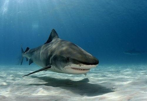 54 факта об акулах