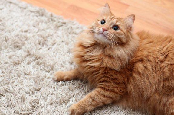 Как убрать запах кошки