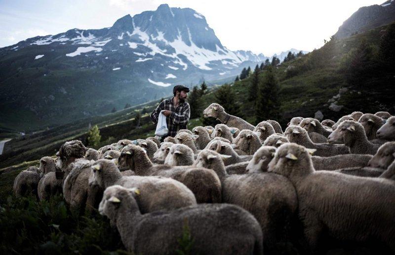 Пастух Гаэтан Меме. Альпы, жизнь, пастух, работа