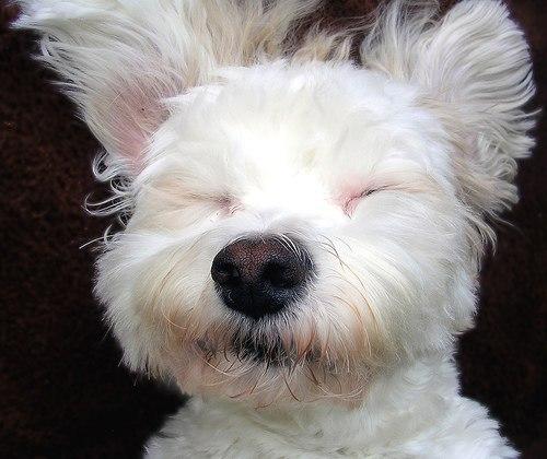 Если вы с утра проснулись с мыслью «я хочу собаку»