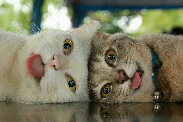 Зачетные и прикольные фотографии с котиками и кошечками