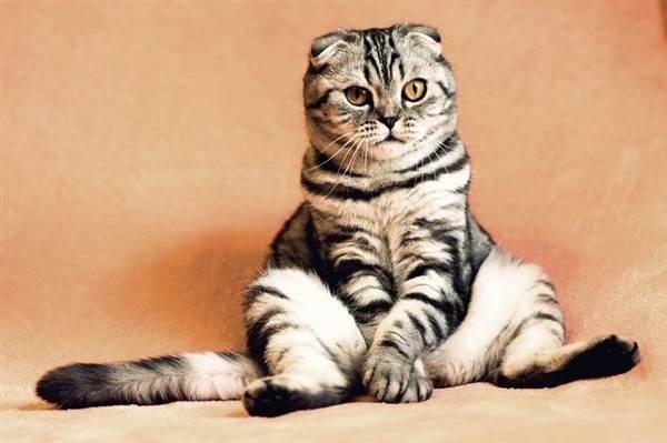 Дети уговорили купить дорогущую кошку. Красавица, но дура, блин!
