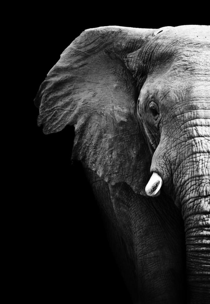 Слепые мудрецы и слон. Притча
