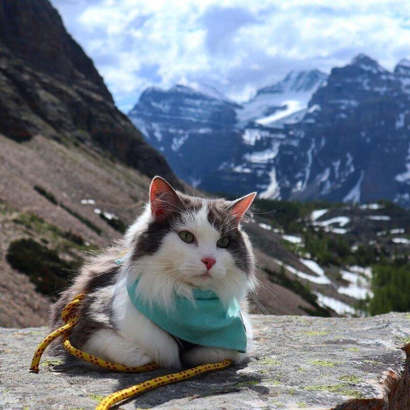 Пушистый кот из Канады гуляет по горам и ведёт Инстаграм, которому позавидует любой тревел-блогер Кот путешественник,мир,отдых,путешествие,турист