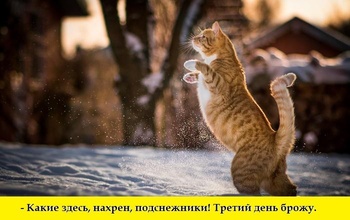 Маленькие истории котов в картинках-3