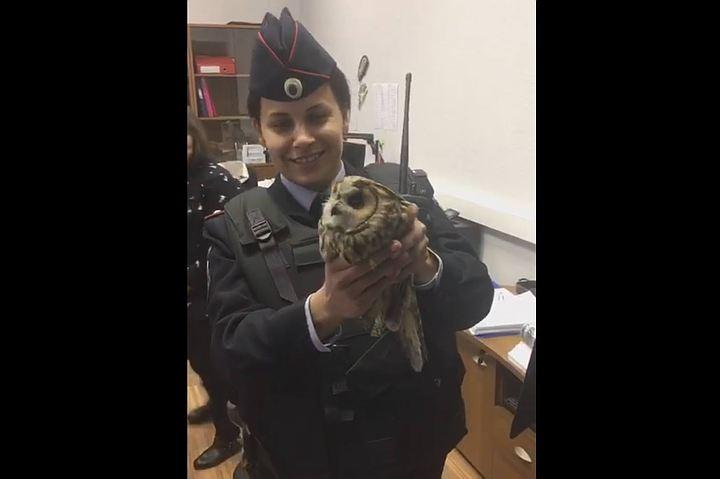 Сотрудники МИД РФ спасли сову от агрессивных московских ворон