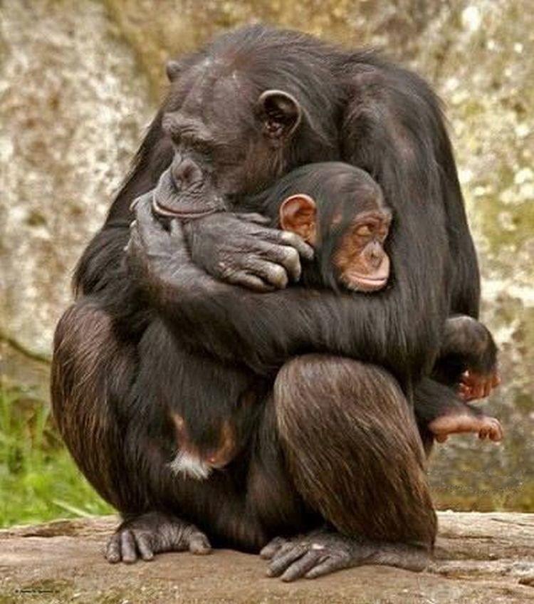 поражает обезьяна целует картинки капусты содержат большое