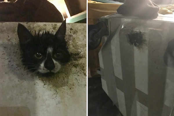 A kitten is stuck in a dumpster while foraging for food