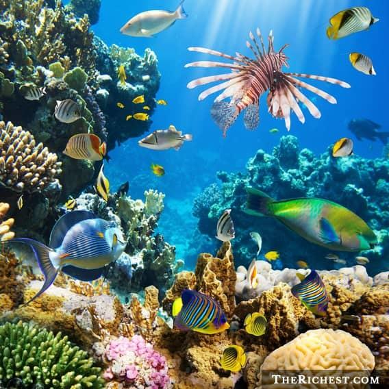 Говорящие кораллы мстят человечеству море, океан, ужасы