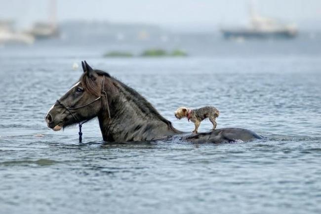 16 животных, которые знают, что такое настоящая взаимовыручка