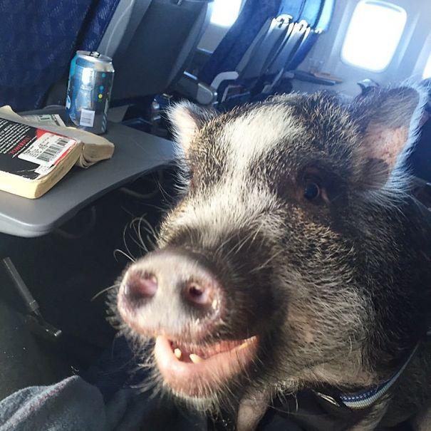 Необычные соседи в самолетах