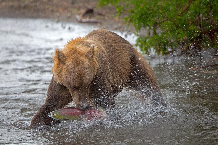 Камчатка. Земля медведей камчатка