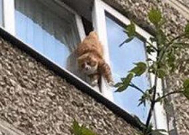 В Екатеринбурге спасли кота, брошенного уехавшими хозяевами и застрявшего в окне