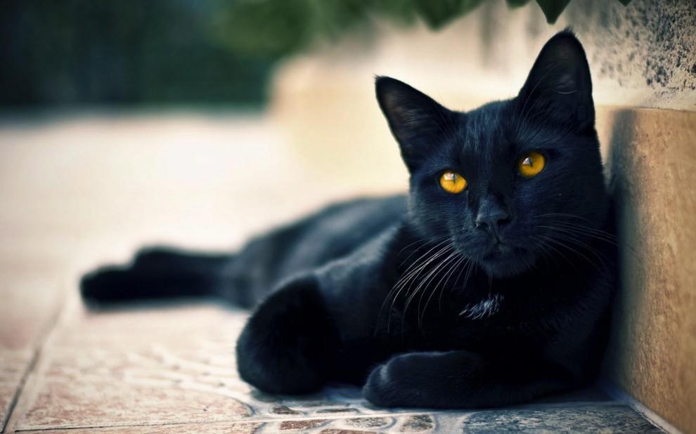 Black Cat 990x618 Самые популярные суеверия и их происхождение