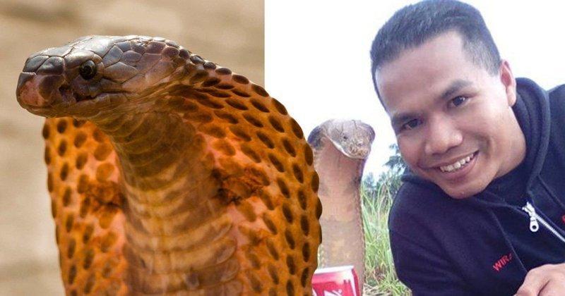 Смертельный поцелуй: «Заклинатель змей» погиб от укуса кобры