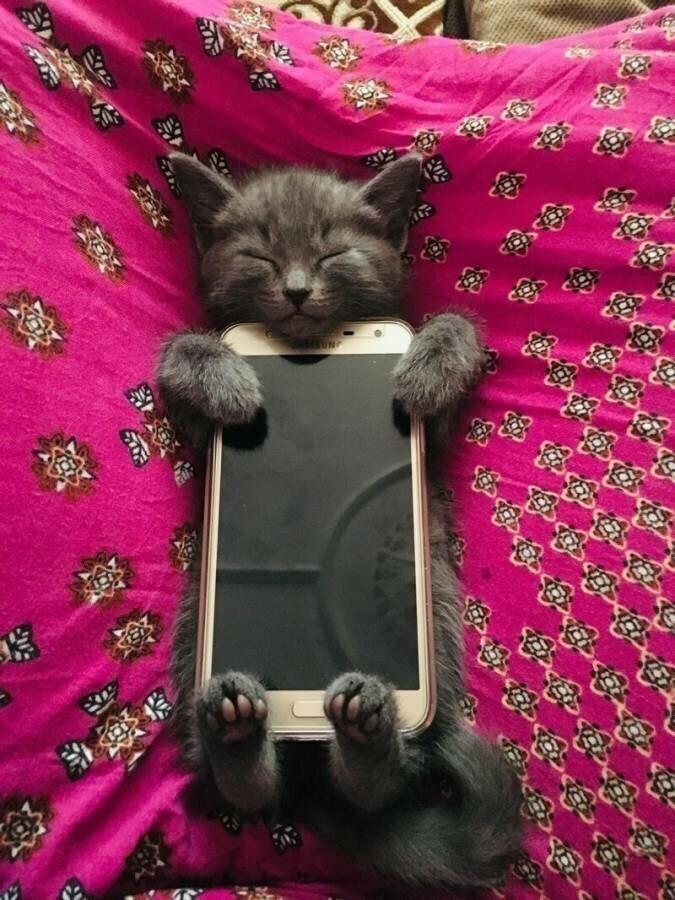 Кошачий фотопозитив домашние животные,наши любимцы