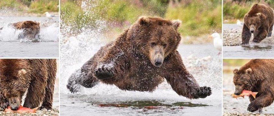 Полёт медведя во время рыбалки