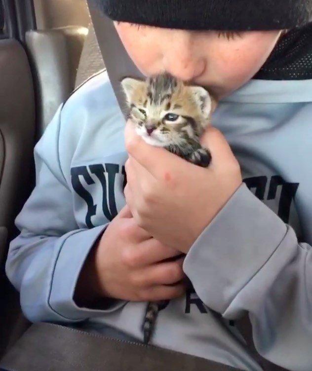Мальчик привез в нашу ветбольницу кошку, она была в тяжелом состоянии, и я его ругала