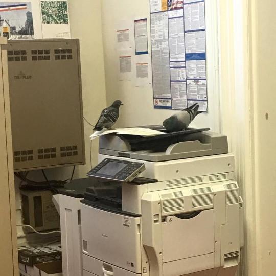 Удивить работника офиса просто невозможно офис, офисный планктон, прикол, работа, юмор