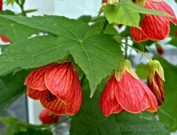 Фото и названия красивых комнатных цветов
