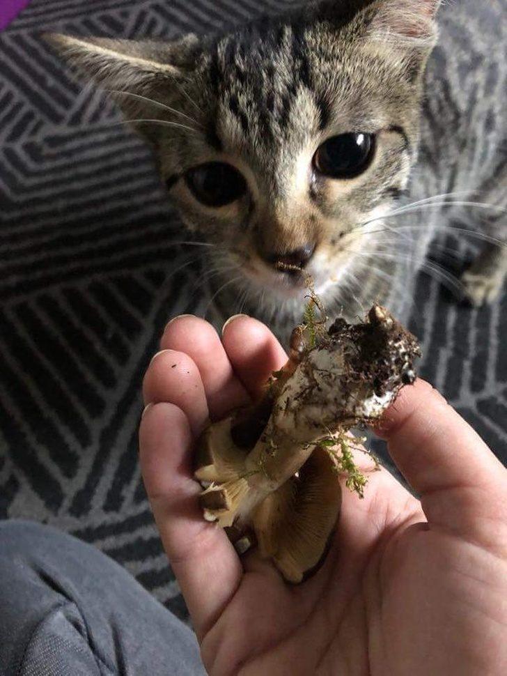Зачем они это делают? 12 объяснений странных кошачьих повадок