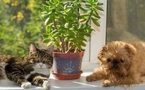 10 комнатных растений, которые могут навредить домашнему питомцу…