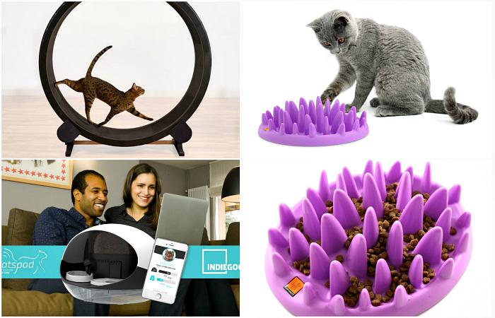 17 гениальных изобретений, которые придутся по душе всем владельцам котов