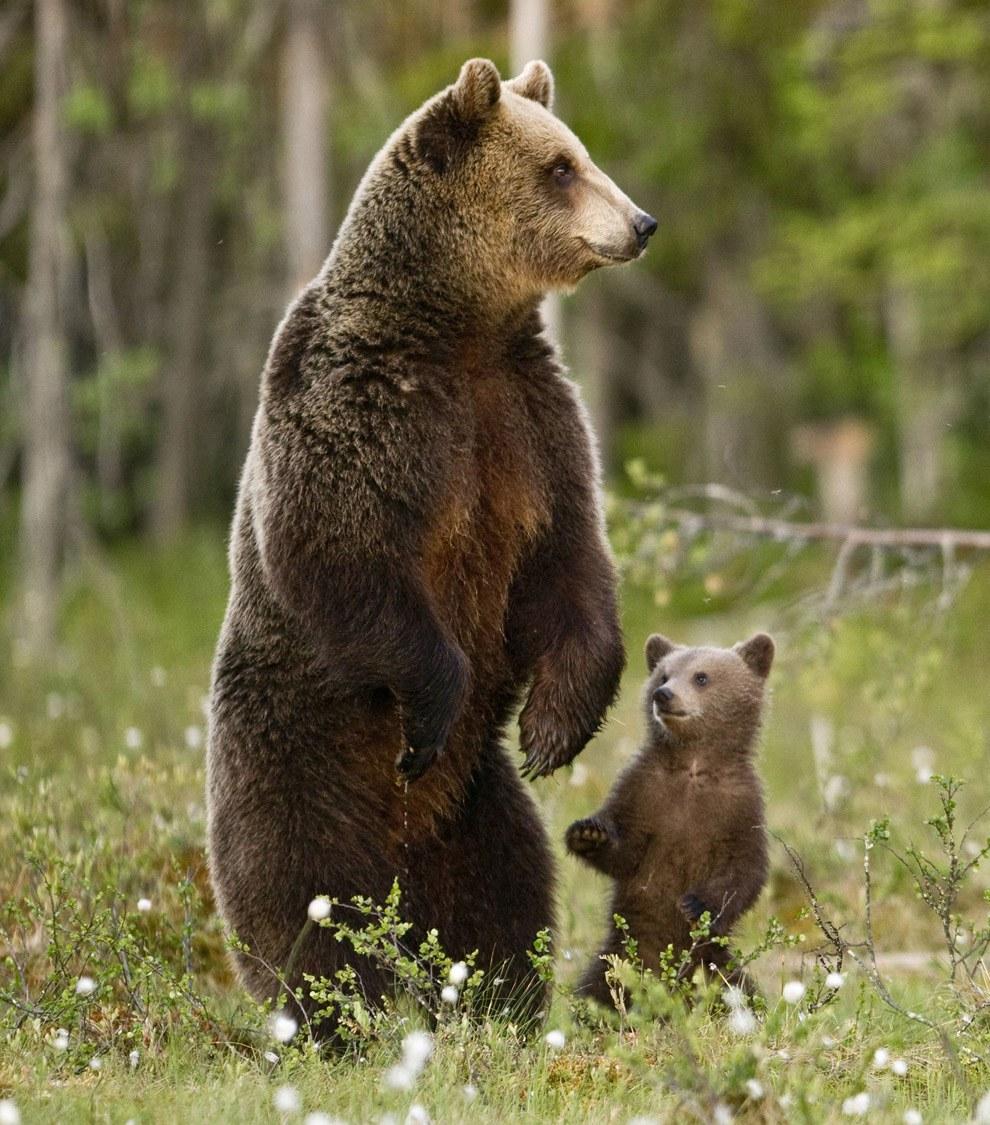 Галактика открытка, картинка с медведями