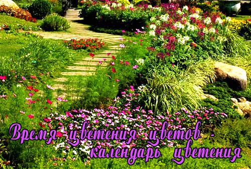 Календарь цветения садовых цветов