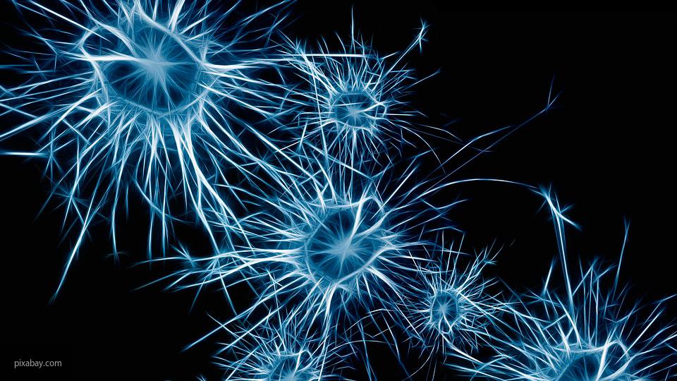 Ученые доказали, что мозг см…