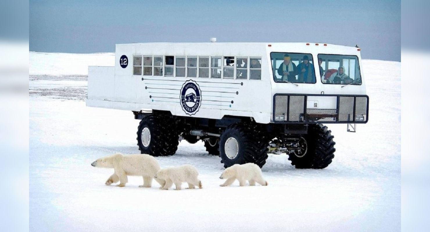 Для поездок к медведям: автобус-вездеход Tundra Buggy Автомобили