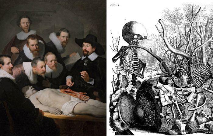 Бесстыдное искусство: удивительные иллюстрации голландских врачей-анатомов XVII века