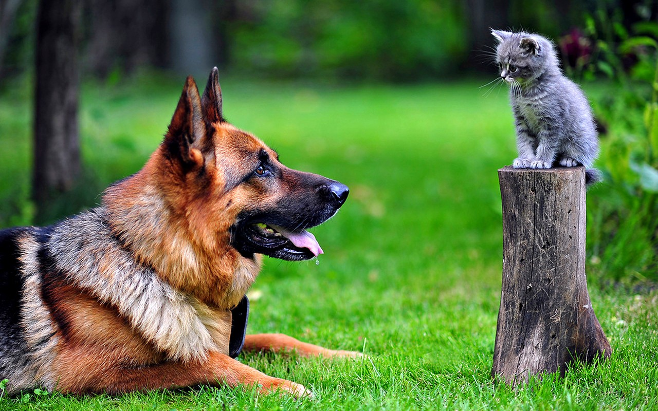 ТОП 5 маленьких задир!Котята нападают на собак!