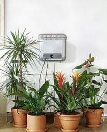 Растения на время вашего отпуска