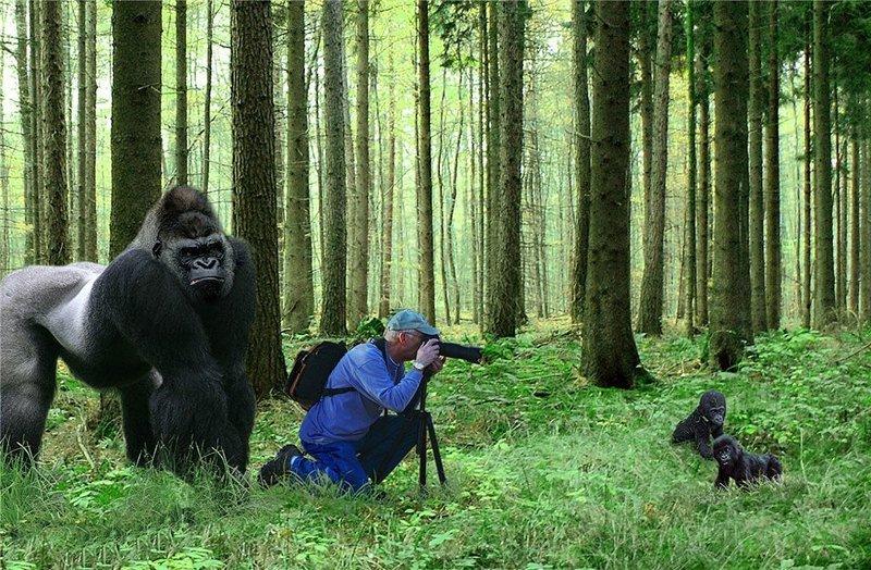 впечатлило, разные приколы в лесу фото определим жанр оценим