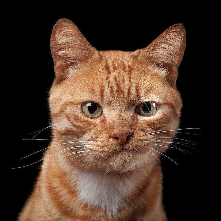 Всемирный день кошек. Галере…